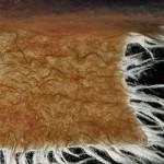 Uso della lana greggia @Feltrosa2012