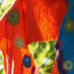 Feltrosilvia – prefeltri