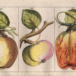 Conoscere la Val di Non: la mela